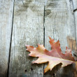 Autumn leaf on wooden boards background — Stock Photo #13279355