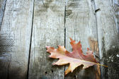 Autumn leaf on wooden boards background — Stock Photo