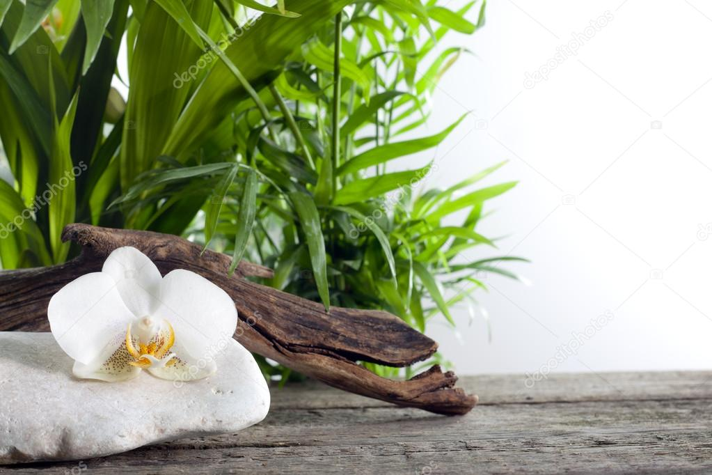 Orchid on stone with palm spa concept against white — Stock Photo #14727795