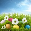 Easter colorful eggs in green grass with flowers on meadow — Stock Photo