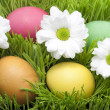 Stock Photo: Easter eggs with daisy on abstract green grass
