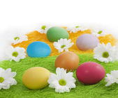 Easter eggs with daisy on abstract green grass — Stock Photo