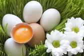 Easter organic eggs in the green grass — Stock Photo