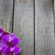 Orchid on wooden boards spa cosmetic abstract vintage background — Stockfoto