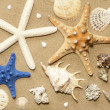 Shells and starfish on beach on sand background abstract — Stock Photo #24098571