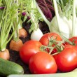 Many fresh organic vegetables growing in the garden closeup — Stock Photo #25387917