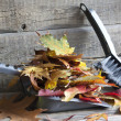 Autumn cleaning abstract with leaves — Stock Photo