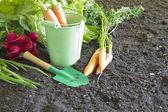 Fresh spring organic vegetables on the soil in the garden — Stock Photo