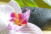 Zen stones with orchid abstract closeup still life — Stock Photo