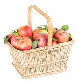 Здоровый органических яблоки в корзину, изолированные на белом фоне — Стоковое фото