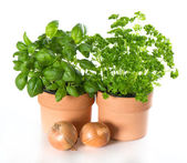 Kitchen herbs basil and parsley in pots with onion — Stockfoto