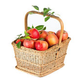Healthy organic apples in the basket — Stock Photo