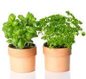 Kitchen herbs basil and parsley — Stock Photo
