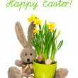 Stock Photo: Easter decoration with eggs, narcissus flowers and bunny