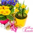 Spring flowers with easter decoration — Stock Photo