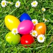 Colorful easter eggs with daisy flowers — Stock Photo