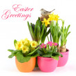 Stock Photo: Colorful spring flowers. easter decoration
