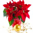 Red poinsettia. christmas flower with golden decoration — Stock Photo