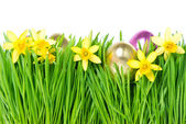 Fresh spring narcissus flowers with golden easter eggs — Stock Photo