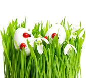 Fresh green grass with flowers and easter eggs — Stock Photo