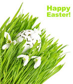 Fresh green grass with flowers and easter egg — Stock Photo