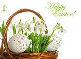 Oeufs de pâques et printemps fleurs perce-neige — Photo