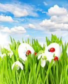 Green grass with easter eggs and sunny sky — Stock Photo