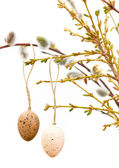Easter eggs on fresh spring tree twigs — Stock Photo