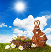 Chocolate easter bunny with flowers on green grass — Stock Photo