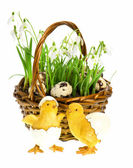 Easter composition with funny chicken — Stock Photo