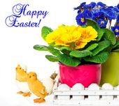 Barevné jaro prvosenka květ s velikonoční dekorace — Stock fotografie