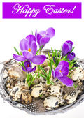 Beautifil spring crocus flowers with easter eggs decoration — Stock Photo