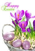 Flores de primavera azafrán beautifil con decoración de huevos de pascua — Foto de Stock