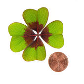 Symbols of luck. coin and shamrock leaf — Stock Photo