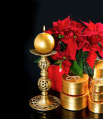 Red christmas flower poinsettia with golden gifts — Stockfoto