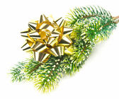 Evergreen tree with golden ribbon — Foto Stock