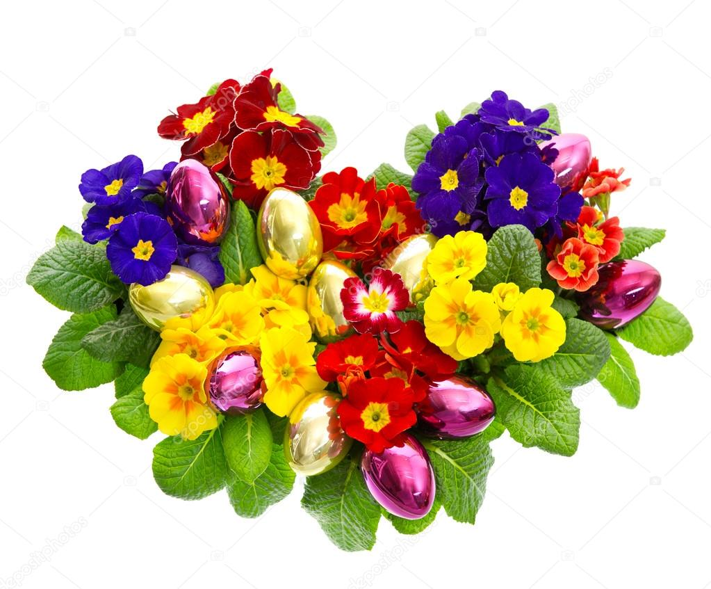 Colorful primula flowers with easter eggs decoration - Plants used for decoration ...