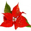 Stock Photo: Red Poinsettia. christmas flower