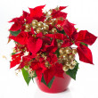 Red poinsettia. christmas flower with golden decoration — Stock Photo #13410843