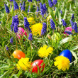 Colorful easter eggs on a beautiful spring meadow with dandelion — Stock Photo #13412270