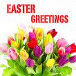 Bouquet of fresh colorful tulips. easter greetings — Stock Photo