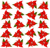 Poinsettia. background with red christmas flowers — Stok fotoğraf