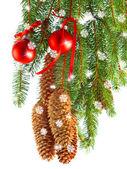 与红球和杉木树分支的圣诞装饰 — 图库照片