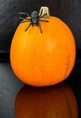Pumpa med spindel på svart — Stockfoto