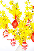 Forsythia flowers with red easter eggs — Stock Photo