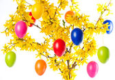 Forsythia flowers and colorful easter eggs — Stock Photo