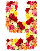 Y、バラの花アルファベット — ストック写真