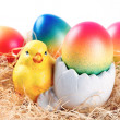 Easter chicken and colorful easter eggs — Foto de Stock