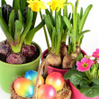 Stock Photo: colorful painted easter eggs with spring flowers