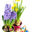 Stock Photo: Easter eggs with spring flowers